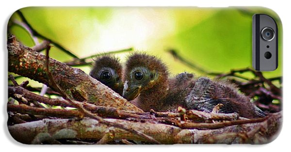 Mangrove Forest iPhone Cases - Hoatzin Hatchlings in the Amazon iPhone Case by Henry Kowalski