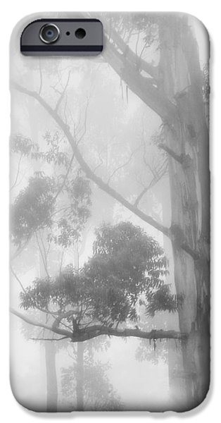 Haunted Forest iPhone Case by Jenny Rainbow