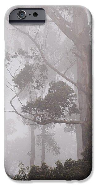 Haunted Forest. Nuwara Eliya. Sri Lanka iPhone Case by Jenny Rainbow