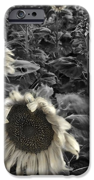 Haunting Sunflower Fields 2 iPhone Case by Dave Dilli