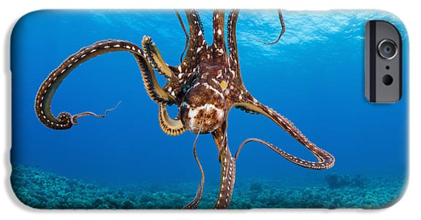 Recently Sold -  - David iPhone Cases - Hawaii, Day Octopus _Octopus Cyanea_. iPhone Case by Dave Fleetham