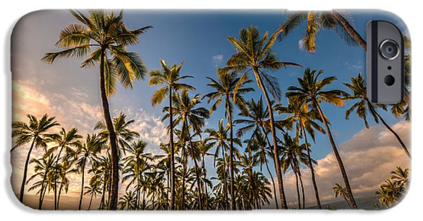 Refuge iPhone Cases - Hawaii Towering Palms iPhone Case by Mike Reid
