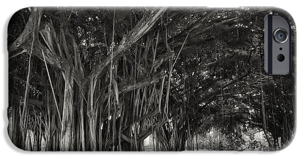 Strange iPhone Cases - Hawaiian Banyan Tree Root Study iPhone Case by Daniel Hagerman