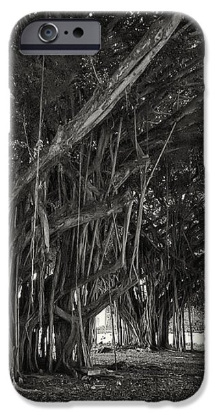 HAWAIIAN BANYAN TREE ROOT STUDY iPhone Case by Daniel Hagerman