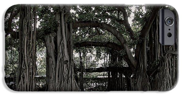 Tree Roots iPhone Cases - Hawaiian Banyan Trees iPhone Case by Daniel Hagerman
