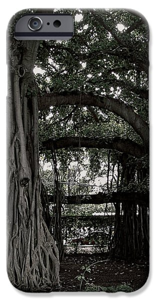 HAWAIIAN BANYAN TREES iPhone Case by Daniel Hagerman