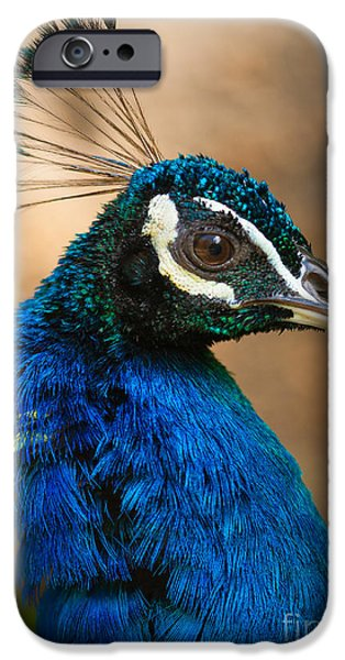 Peafowl iPhone Cases - Hawaiian Peacock iPhone Case by Inge Johnsson