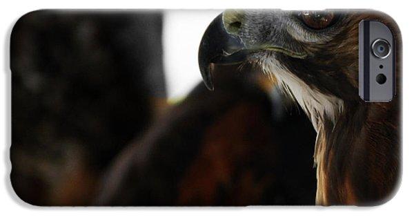 Red Tail Hawk Digital Art iPhone Cases - Hawk Eye iPhone Case by Steven  Digman