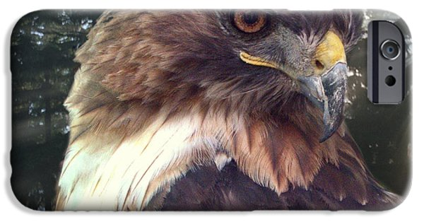 Spirit Hawk Art Print iPhone Cases - Hawk Eye - Wildlife Art Photography iPhone Case by Ella Kaye Dickey