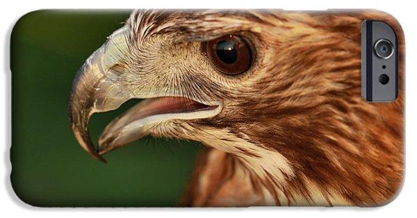 Hawk iPhone Cases - Hawk Eyes iPhone Case by Dan Sproul