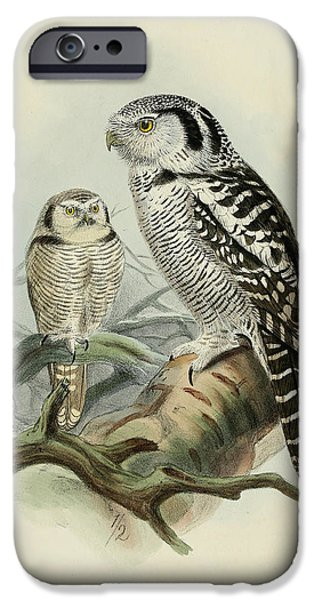 Colored Owls iPhone Cases - Hawk Owl iPhone Case by J G Keulemans