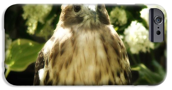 Red Tail Hawk Digital Art iPhone Cases - Hawk Portrait iPhone Case by Gothicolors Donna Snyder