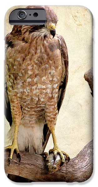 Hawk with Fish iPhone Case by Ray Downing