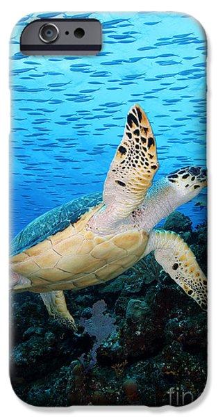 Reptiles Photographs iPhone Cases - Hawksbill on Eldorado iPhone Case by Anna Bennett