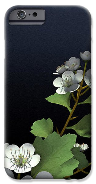 Meditative iPhone Cases - Hawthorne iPhone Case by Cynthia Decker