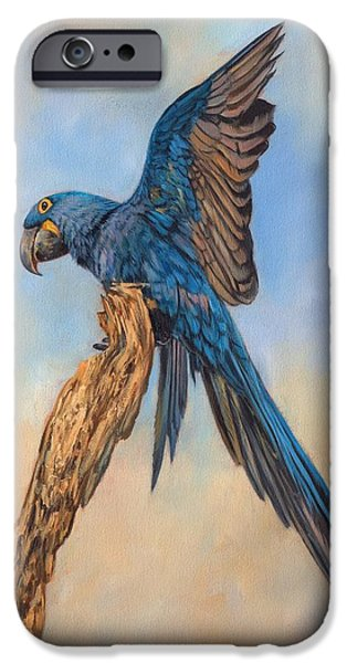 David iPhone Cases - Hayacinth Macaw iPhone Case by David Stribbling