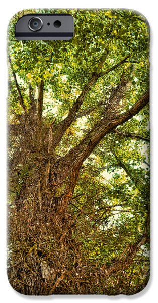 Tree Roots iPhone Cases - Tree Roots iPhone Case by Wim Lanclus