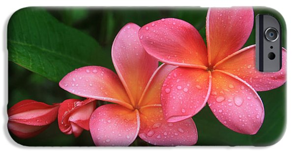 Botanical iPhone Cases - He pua laha ole Hau oli Hau oli oli Pua Melia hae Maui Hawaii Tropical Plumeria iPhone Case by Sharon Mau