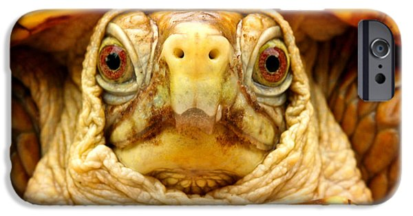 Intrigue iPhone Cases - Head shot iPhone Case by Jean Noren