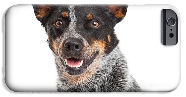 Cattle Dog iPhone Cases - Head Shot Of An Australian Cattle Dog iPhone Case by Susan  Schmitz