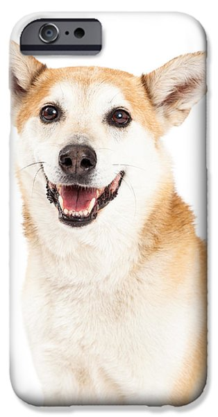 Cattle Dog iPhone Cases - Head Shot of  Australian Cattle and Shiba Inu  Mix Dog iPhone Case by Susan  Schmitz