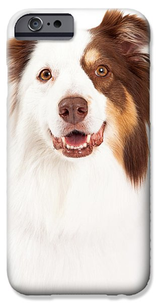 Dog Close-up iPhone Cases - Head Shot of Beautiful Border Collie iPhone Case by Susan  Schmitz