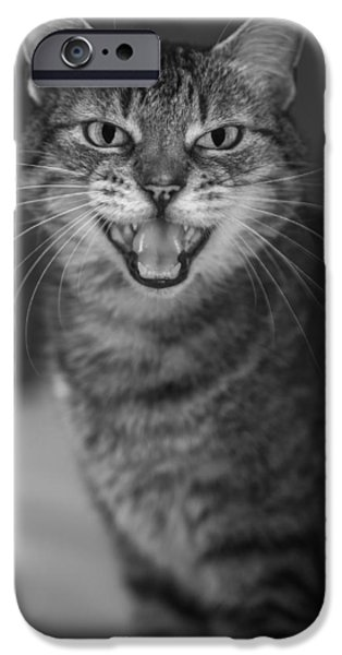 American Shorthair iPhone Cases - Hear Me iPhone Case by Anita Miller