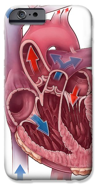 Heart Blood Flow iPhone Case by Evan Oto