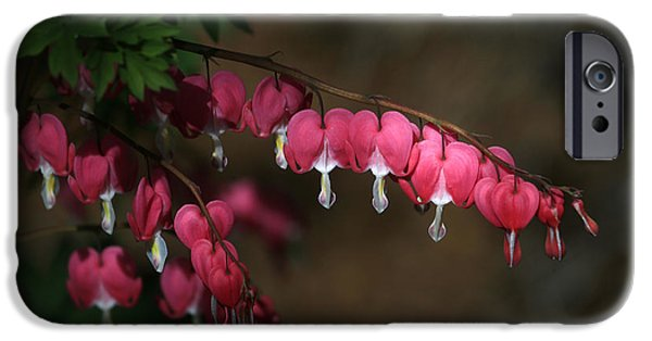 Bleeding Hearts iPhone Cases - Heart Light iPhone Case by Donna Kennedy