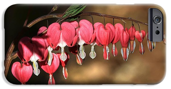 Bleeding Hearts iPhone Cases - Heart to Heart iPhone Case by Donna Kennedy