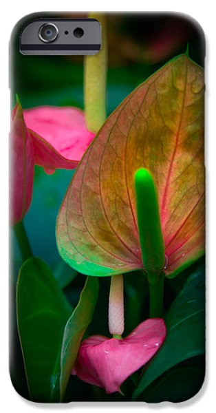 Painter Photographs iPhone Cases - HEARTS of JOY iPhone Case by Karen Wiles