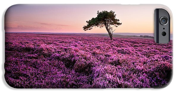Tree iPhone Cases - Heather at Sunset Egton Moor iPhone Case by Janet Burdon