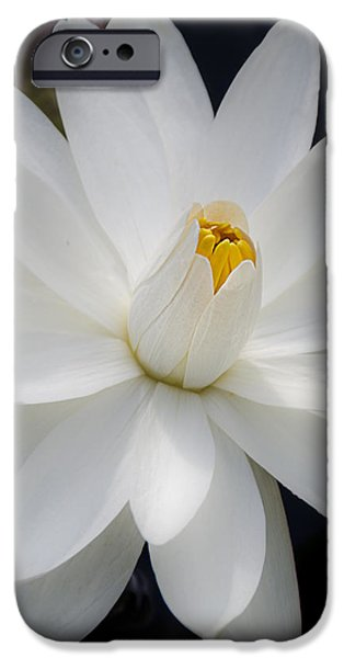 Heavenly Aquatic Bloom iPhone Case by Julie Palencia
