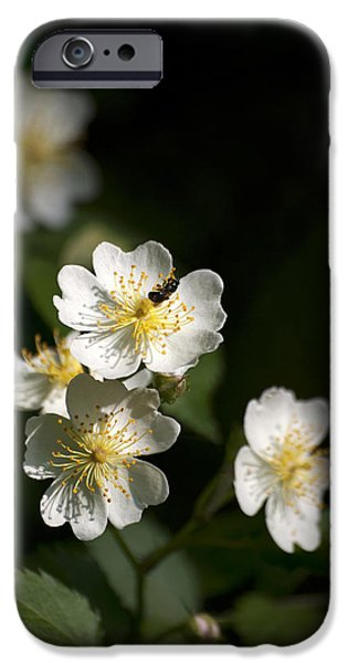 Heaven's Scent iPhone Case by Christina Rollo