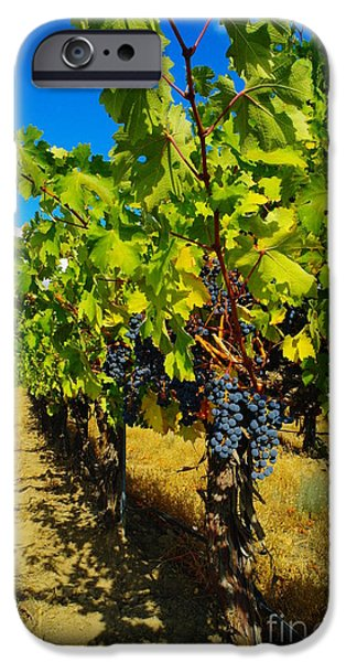 Yakima Valley iPhone Cases - Heavy On The Vine At The High Tower Winery  iPhone Case by Jeff  Swan