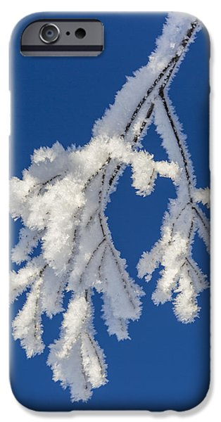 Willow Lake iPhone Cases - Heavy with Frost iPhone Case by Tim Grams