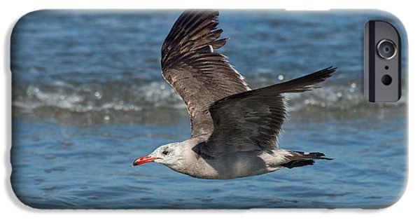 Flying Seagull iPhone Cases - Heermanns Gull iPhone Case by Anthony Mercieca