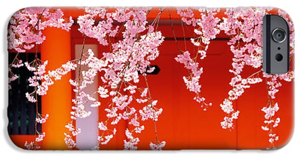 Cherry Blossoms iPhone Cases - Heian-jingu Kyoto Japan iPhone Case by Panoramic Images
