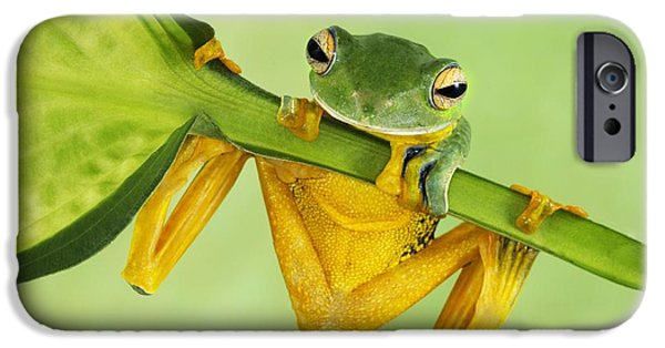 Flying Frog iPhone Cases - Helens tree frog  iPhone Case by Lisa Cuchara