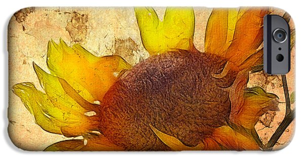 Flora iPhone Cases - Helianthus iPhone Case by John Edwards