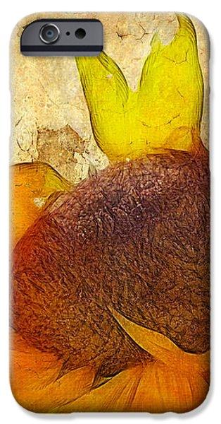 Helianthus iPhone Case by John Edwards