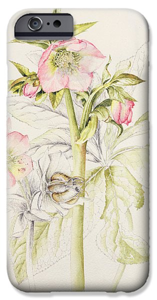 Tasteful Art iPhone Cases - Hellebores iPhone Case by Alison Cooper