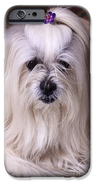 Dog Photography iPhone Cases - Hello Precious iPhone Case by Bob Christopher
