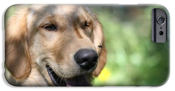 Fuzzy Golden Puppy iPhone Cases - Hello There Mr. Fly iPhone Case by Dylan Bellerose