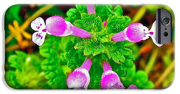 Natchez Trace Parkway iPhone Cases - Henbit at Chickasaw Village Site at Mile 262 of Natchez Trace Parkway-Mississippi iPhone Case by Ruth Hager