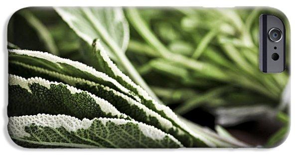 Herbs iPhone Cases - Herbs iPhone Case by Elena Elisseeva