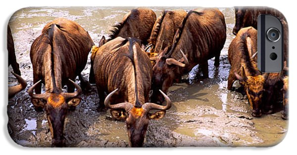 Reserve iPhone Cases - Herd Of Blue Wildebeests Connochaetes iPhone Case by Panoramic Images