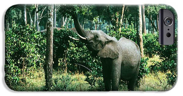 Masai Mara Photographs iPhone Cases - Herd Of Elephants Maasai Mara National iPhone Case by Panoramic Images