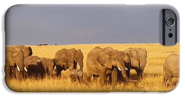 Masai Mara Photographs iPhone Cases - Herd Of Elephants On A Grassland, Masai iPhone Case by Panoramic Images
