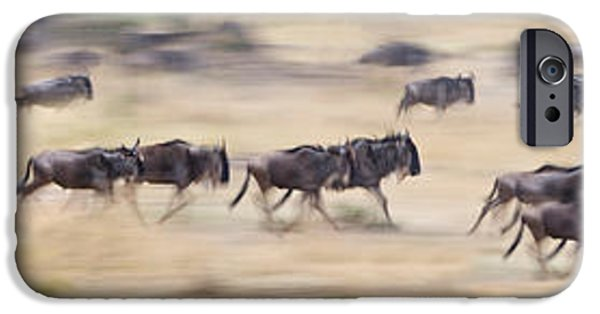 Animals Photographs iPhone Cases - Herd Of Wildebeests Running In A Field iPhone Case by Panoramic Images